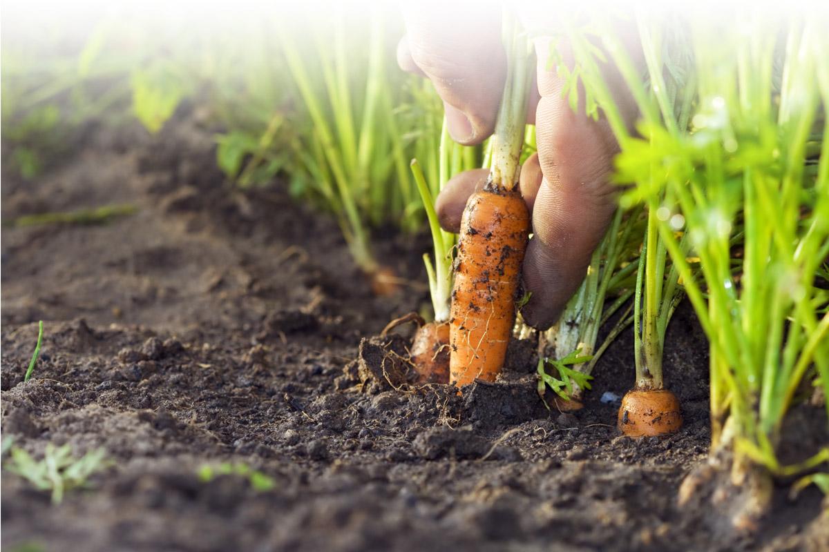 Fertiliser Association of New Zealand